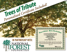 Tress of Tribute