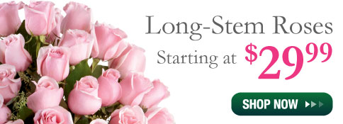 Shop Fresh Premium Long-Stem Roses Now